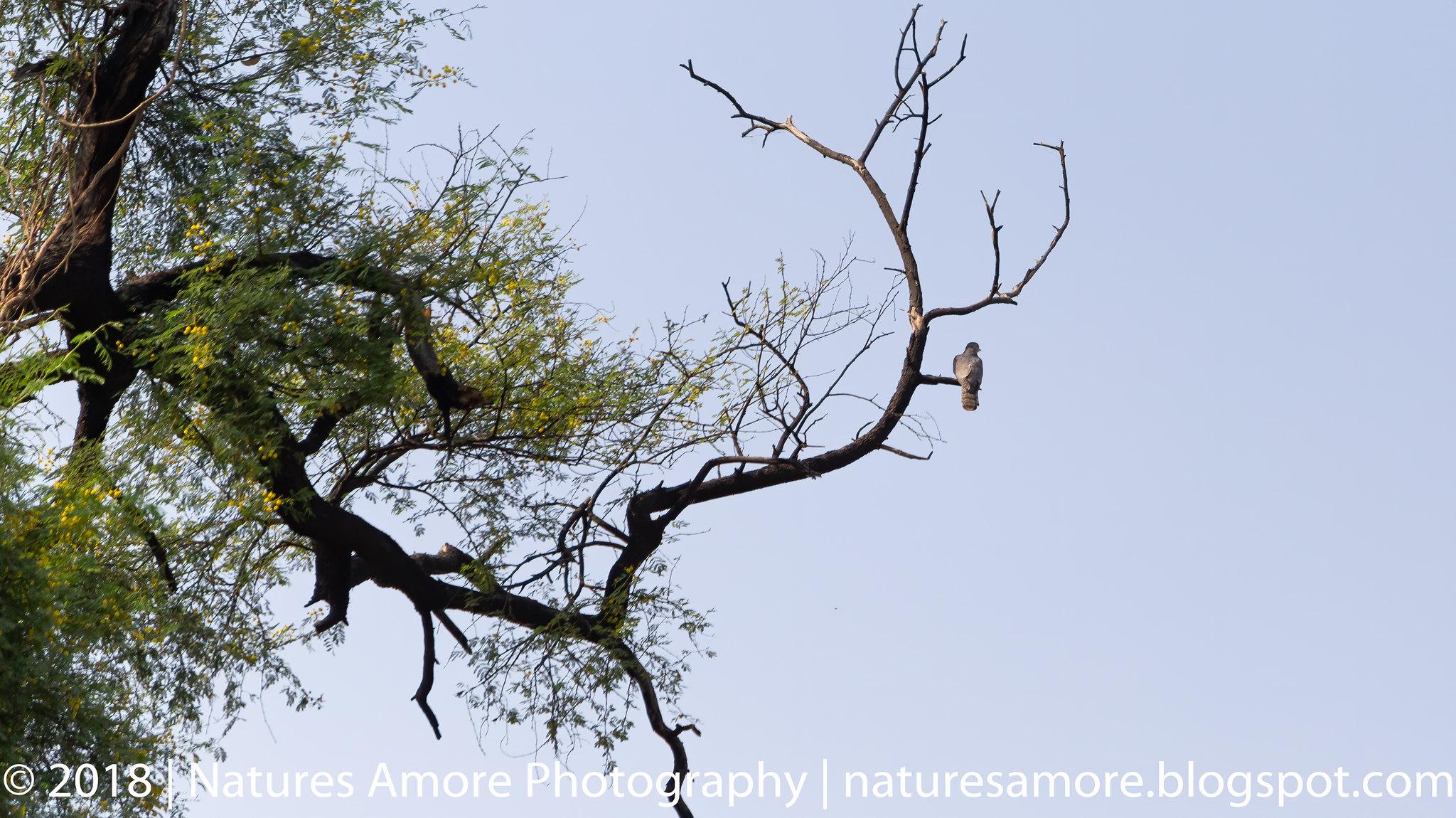 Bharatpur Bird Sanctuary-1