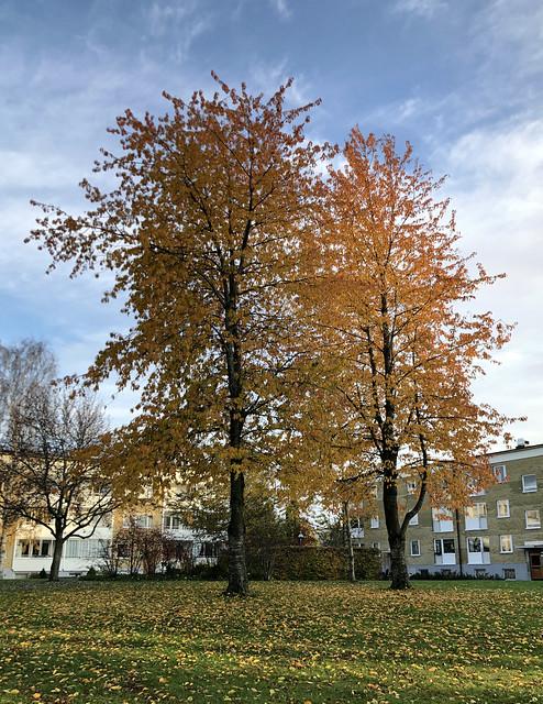 autumn_9322