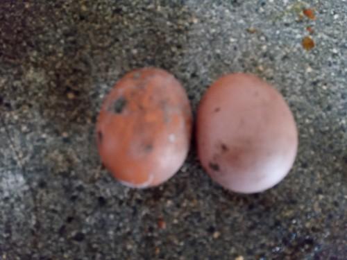 eggs Jan 2020 1