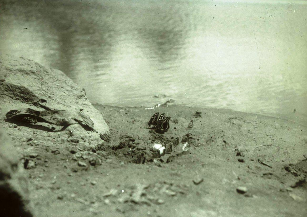 481. Река Бадделе. Бабочки на песке