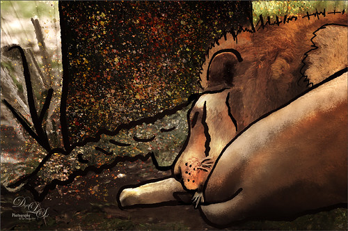 Cartoon or Comic Image of a Sleeping Lion at the Jacksonville Zoo