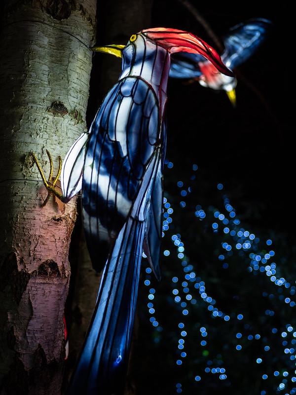 Lumières Sauvages de Thoiry (G9 + PL10-25) 49335671748_ca278e35c7_c