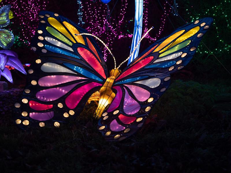 Lumières Sauvages de Thoiry (G9 + PL10-25) 49335692293_eac28f5d03_c
