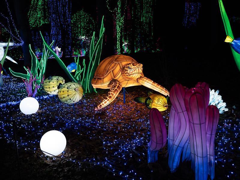 Lumières Sauvages de Thoiry (G9 + PL10-25) 49336132861_a0290fd842_c