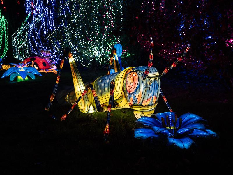 Lumières Sauvages de Thoiry (G9 + PL10-25) 49336154596_8bfc5f6c3e_c