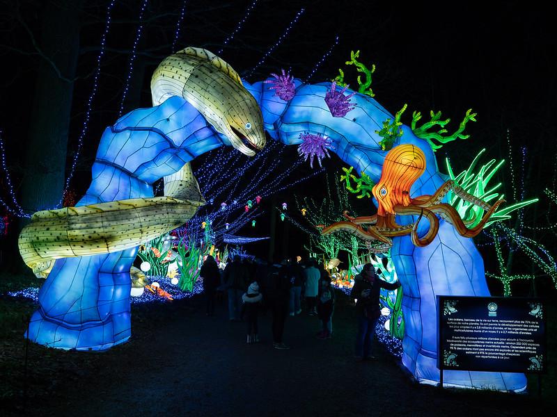 Lumières Sauvages de Thoiry (G9 + PL10-25) 49336348792_c367f695ba_c
