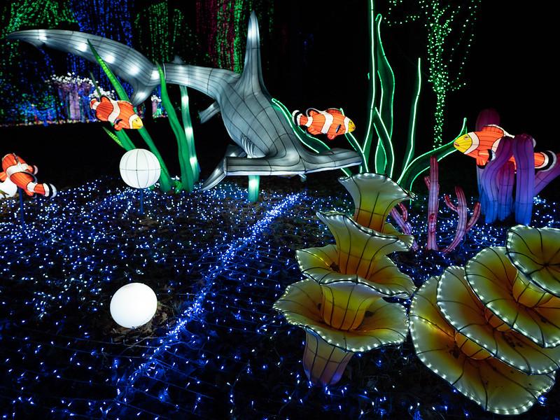 Lumières Sauvages de Thoiry (G9 + PL10-25) 49336349322_f64da73b04_c