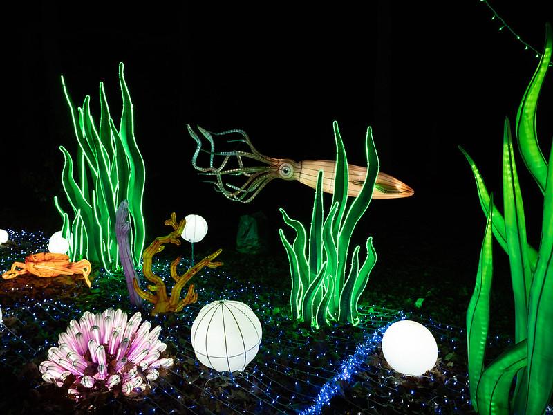Lumières Sauvages de Thoiry (G9 + PL10-25) 49336349647_2caff81bee_c