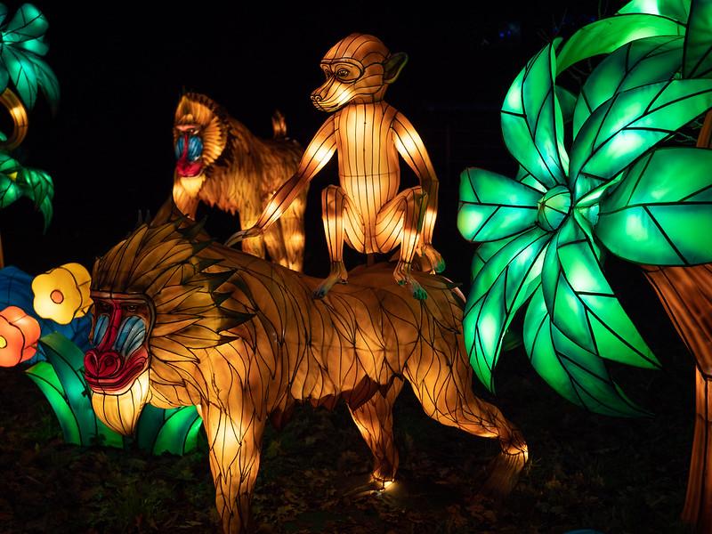 Lumières Sauvages de Thoiry (G9 + PL10-25) 49336355002_1bdb2427e4_c