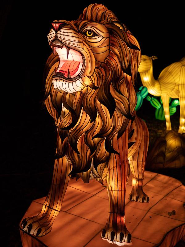 Lumières Sauvages de Thoiry (G9 + PL10-25) 49336359192_bb14a36e29_c