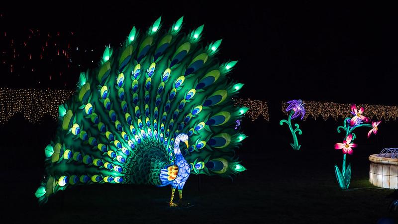 Lumières Sauvages de Thoiry (G9 + PL10-25) 49336370242_a9cd62d60a_c