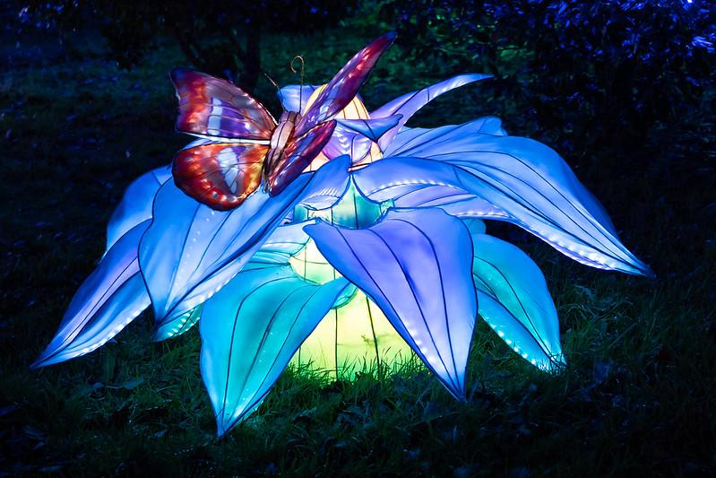 Lumières Sauvages de Thoiry (G9 + PL10-25) 49336370802_544feb8e20_c