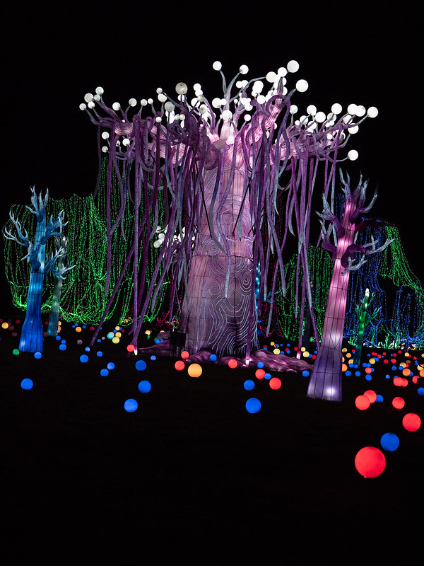 Lumières Sauvages de Thoiry (G9 + PL10-25) 49336372642_f8e469cb67_c