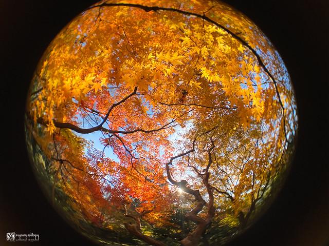 繽紛世界,盡收掌心:ShiftCam 旅行攝影組 for iPhone 11 Pro | 51
