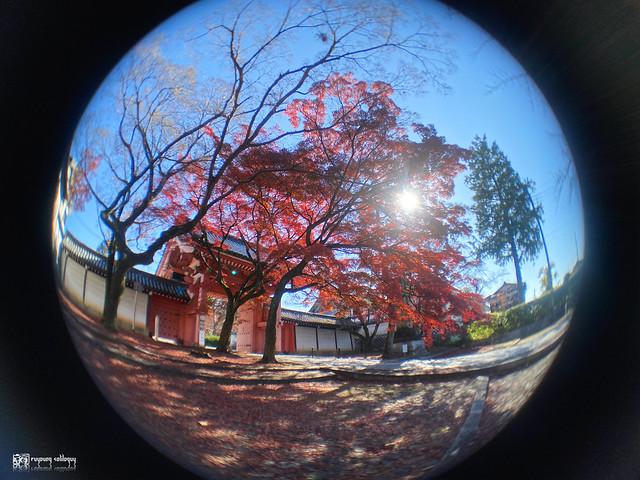 繽紛世界,盡收掌心:ShiftCam 旅行攝影組 for iPhone 11 Pro | 52