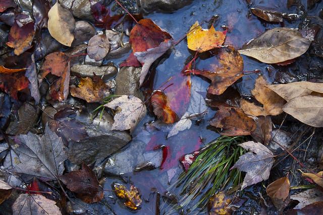 Autumn | Leaves