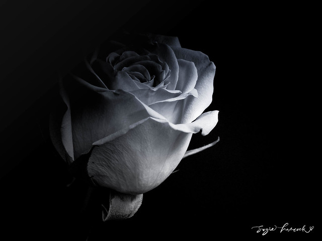 One rose is enough...