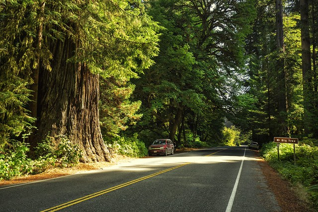 Redwood National and State Parks,California,USA