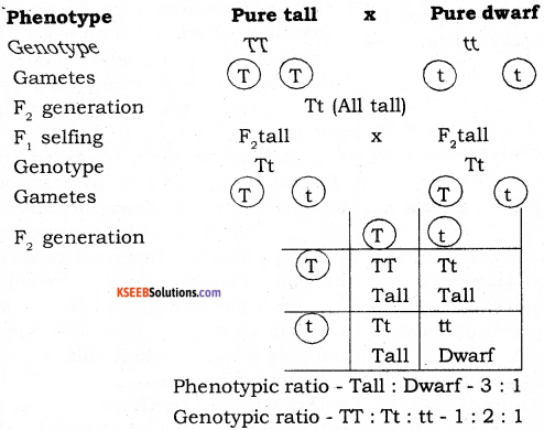 2nd PUC Biology Model Question Paper 1 with Answers 3