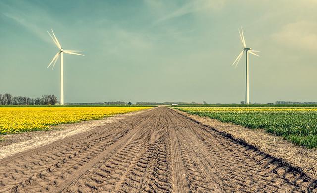 Two wind turbines guarding the flower fields.