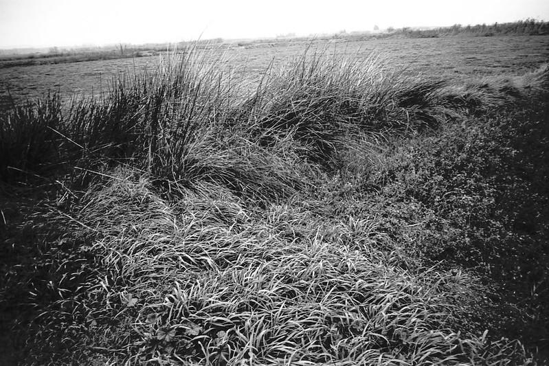 Leica M6 - Voigtlander21f4 - Technical Pan @12