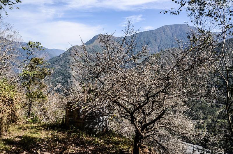 梅在良楠山 (8)