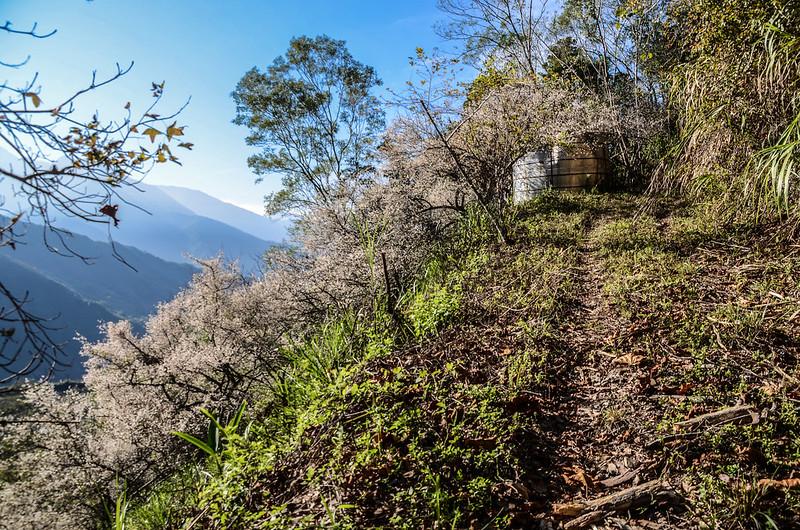 梅在良楠山 (1)