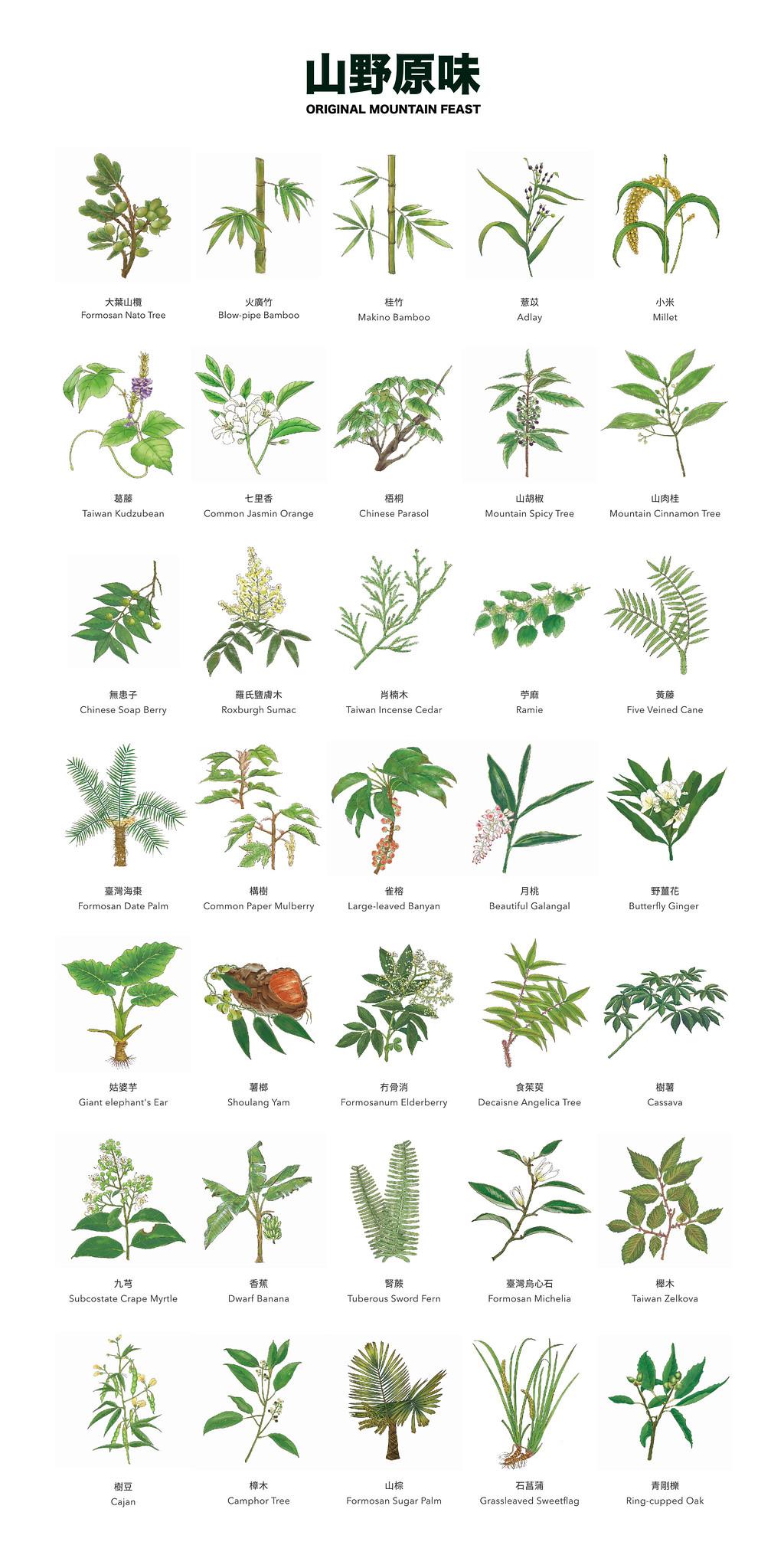 台大實驗林民族植物食農教育館山野原味展出的35種植物中英文名摺頁圖。圖片來源:築點設計提供