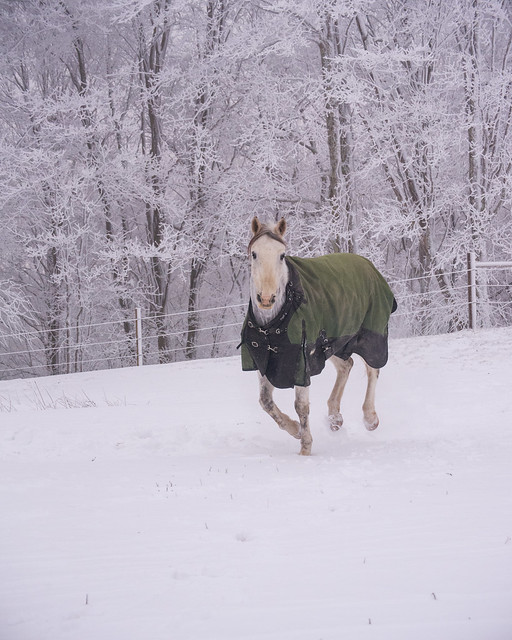 202001095 Horses and Dogs in Snow_337