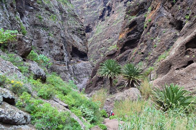 Walking in Masca Barranco, Tenerife