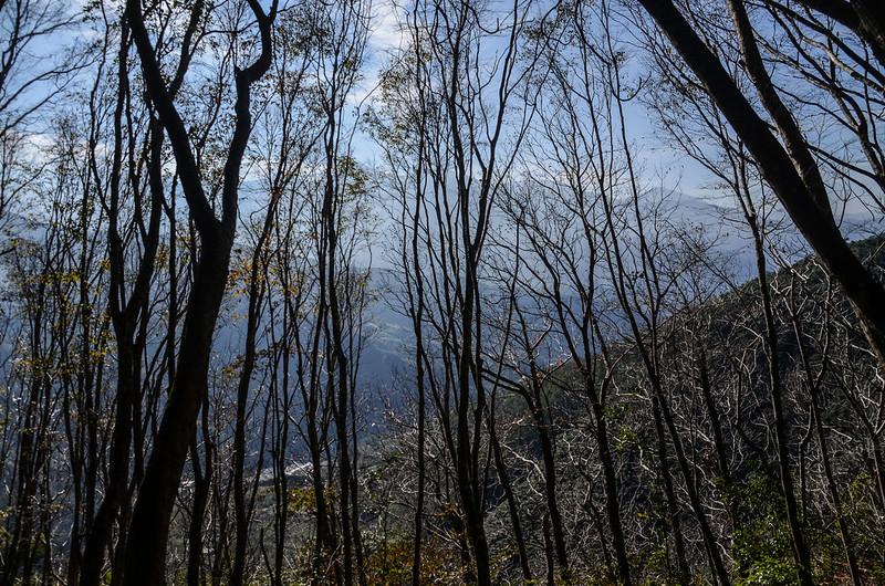 良楠山登山步道優美林相路段 (2)