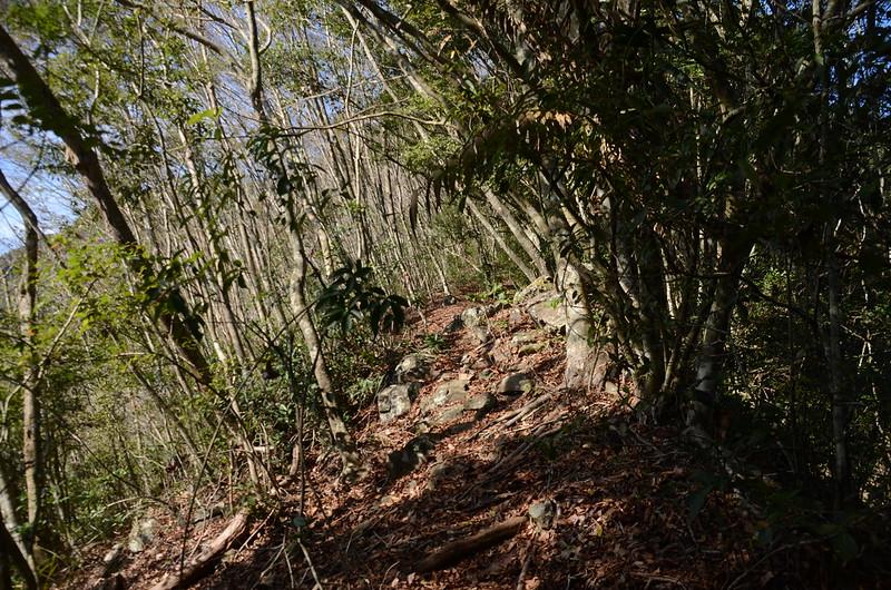 良楠山登山步道優美林相路段 (1)
