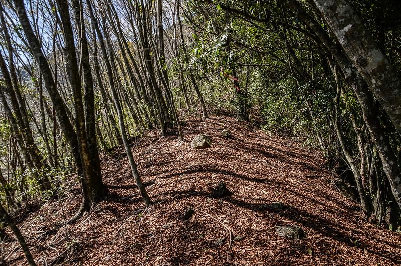 良楠山登山步道優美林相路段 (5)
