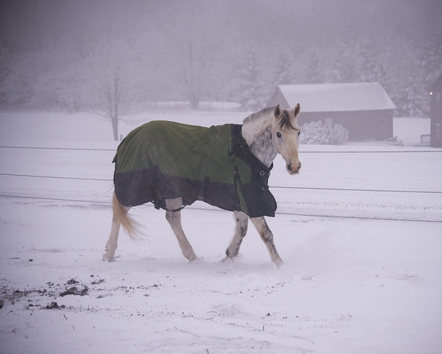 202001095 Horses and Dogs in Snow_183