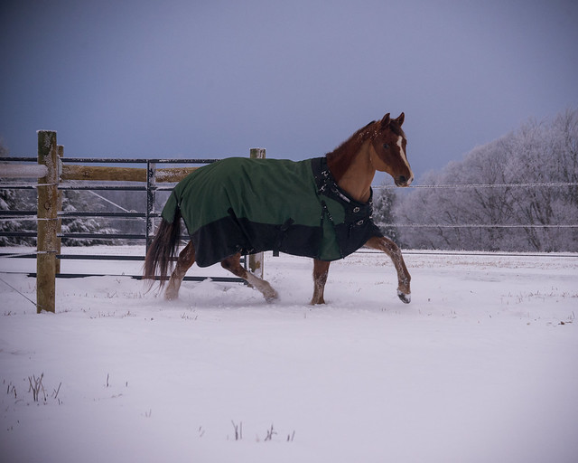 202001095 Horses and Dogs in Snow_215