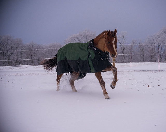 202001095 Horses and Dogs in Snow_218