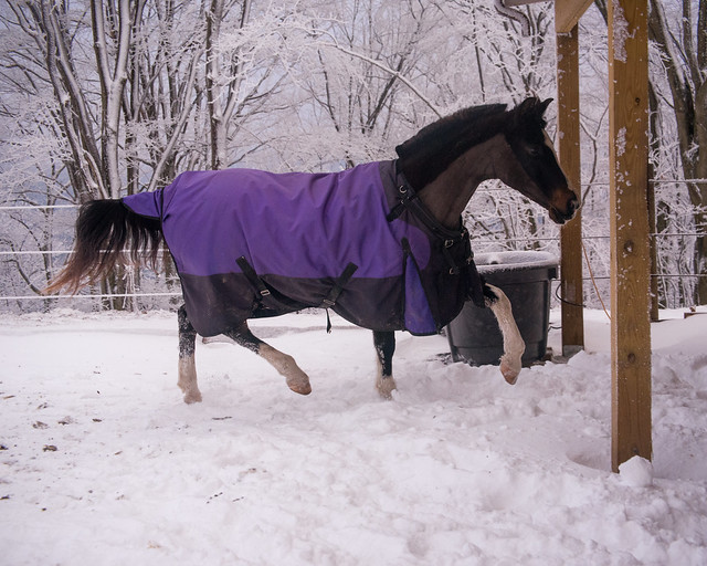 202001095 Horses and Dogs in Snow_233