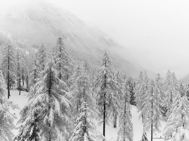 snow and forests