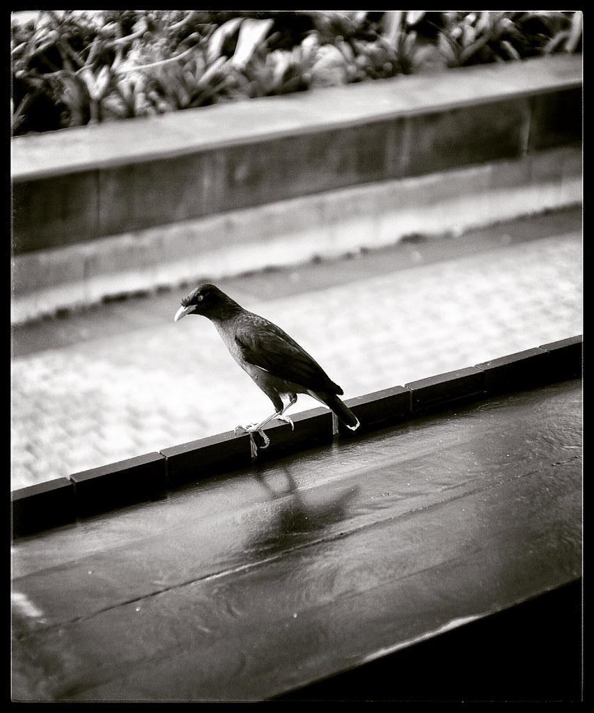 Grinny Bird