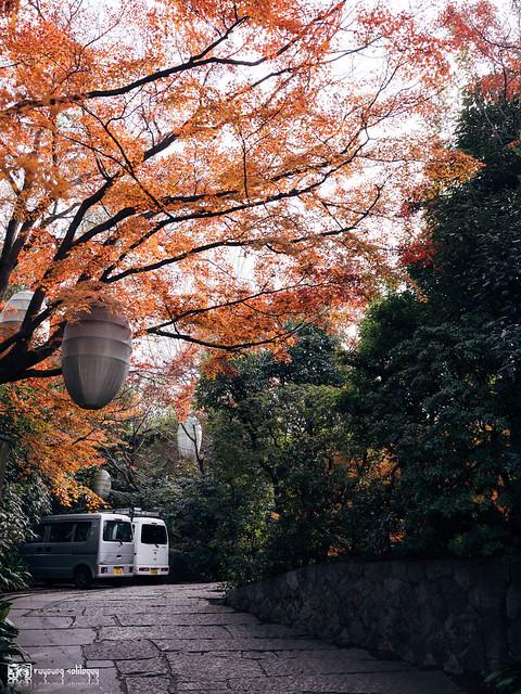 悠然自在的巡遊:Fujifilm GFX 50R | 97
