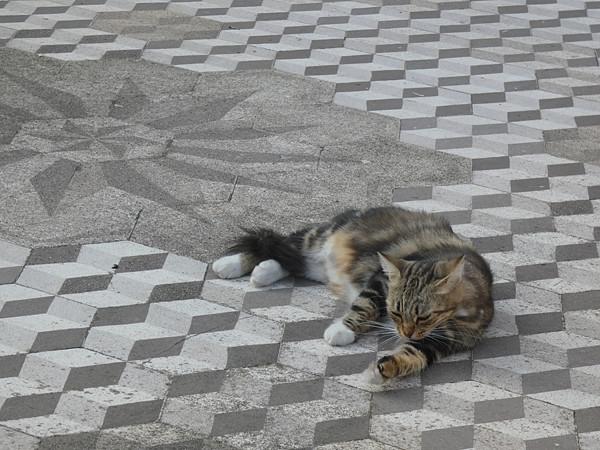 chat gris sur sol gris