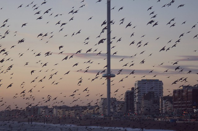 Brighton and its starlings