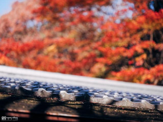 悠然自在的巡遊:Fujifilm GFX 50R | 79