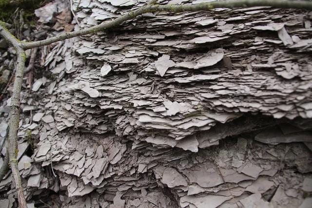 Diktüoneema on kivim mis katab fosforiiti ja takistab isesüttimise tõttu selle kaevandamist. Diktüoneemakilta on uraanimaagina kaevandatud Sillamäel, põlevkivina aga Ülgasel ja Maardus.