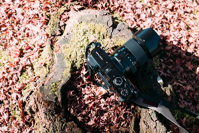 悠然自在的巡遊:Fujifilm GFX 50R | 67