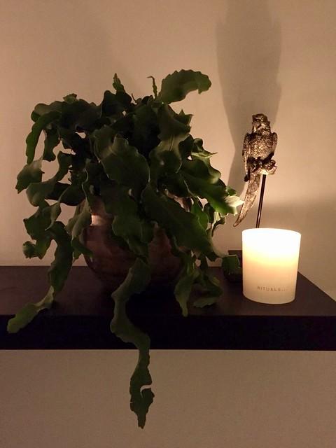 Plant op plank kaarslicht
