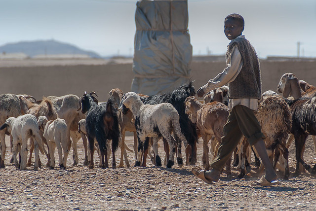 Young herdsman with his herd, near Abri, northern Sudan