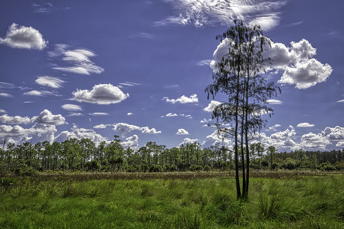 horizontal landscape outdoors outside nature trees clouds sky blue green artsy aurorahdr florida