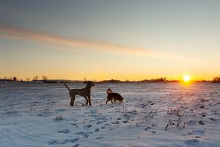 Sunrise fun with dogs