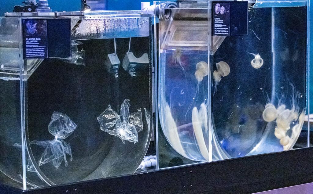 VA-jellyfish display